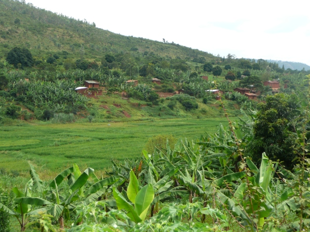 Lush farmland typical of Burundi