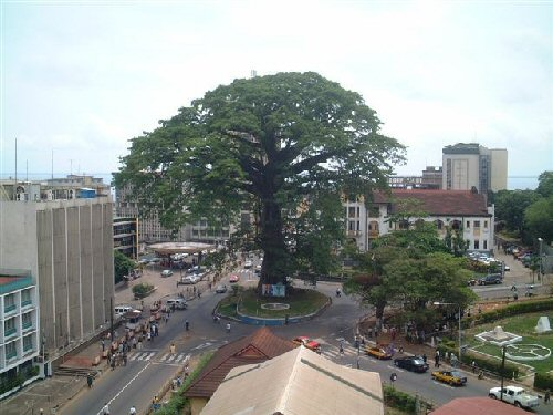 Slightly disappointed at missing out on the chance to hug this splendid big cotton tree in Freetown