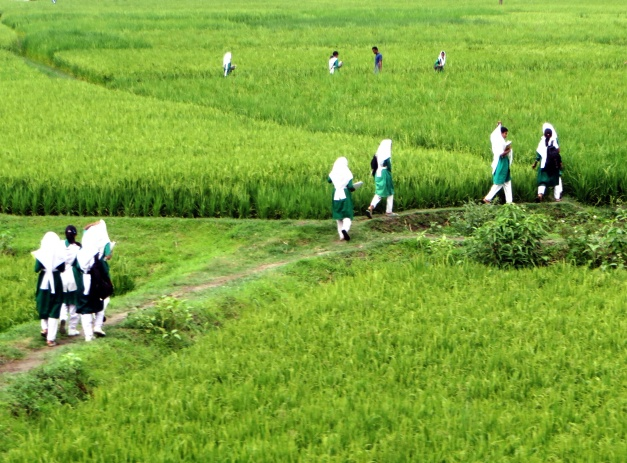 Girls walking home from school through the paddy fields