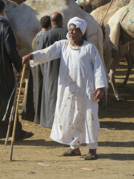 The latest fashion in the world of camel herding