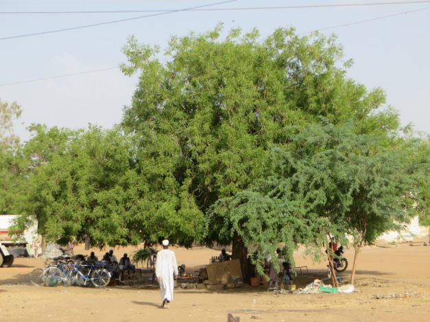 tea and shade, possibly the two most important components of Sudanese social life