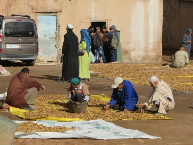 Real life Moroccans doing stuff - sorting the walnut harvest